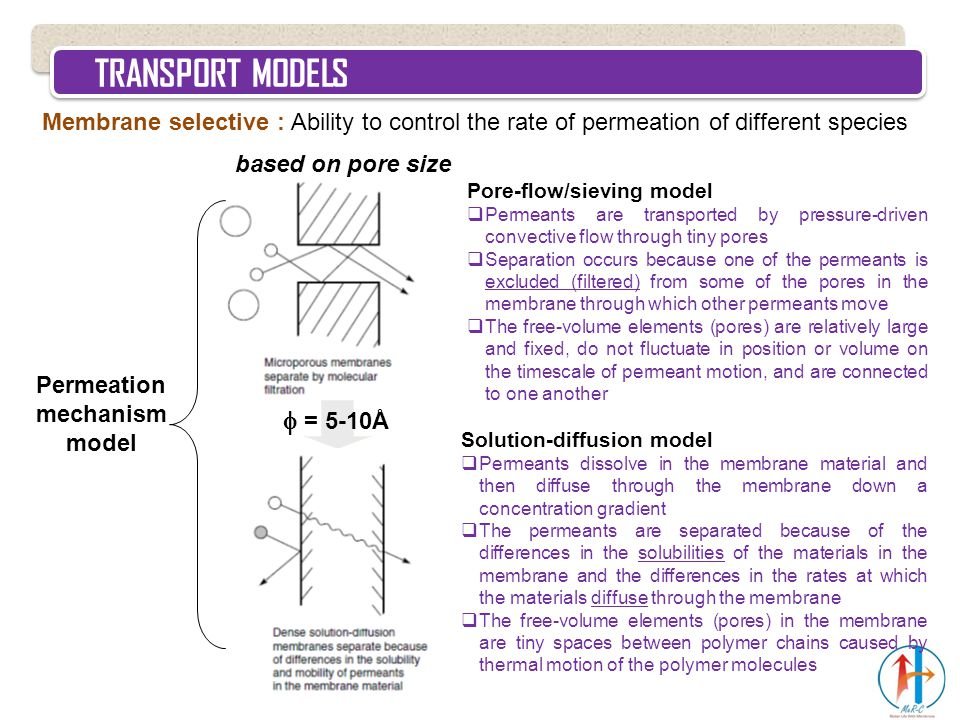 TRANSPORT MODELS Membrane selective : Ability to control the rate of permeation of different species Permeation mechanism model Solution-diffusion mod