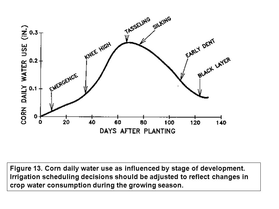 Figure 13. Corn daily water use as influenced by stage of development. Irrigation scheduling decisions should be adjusted to reflect changes in crop w