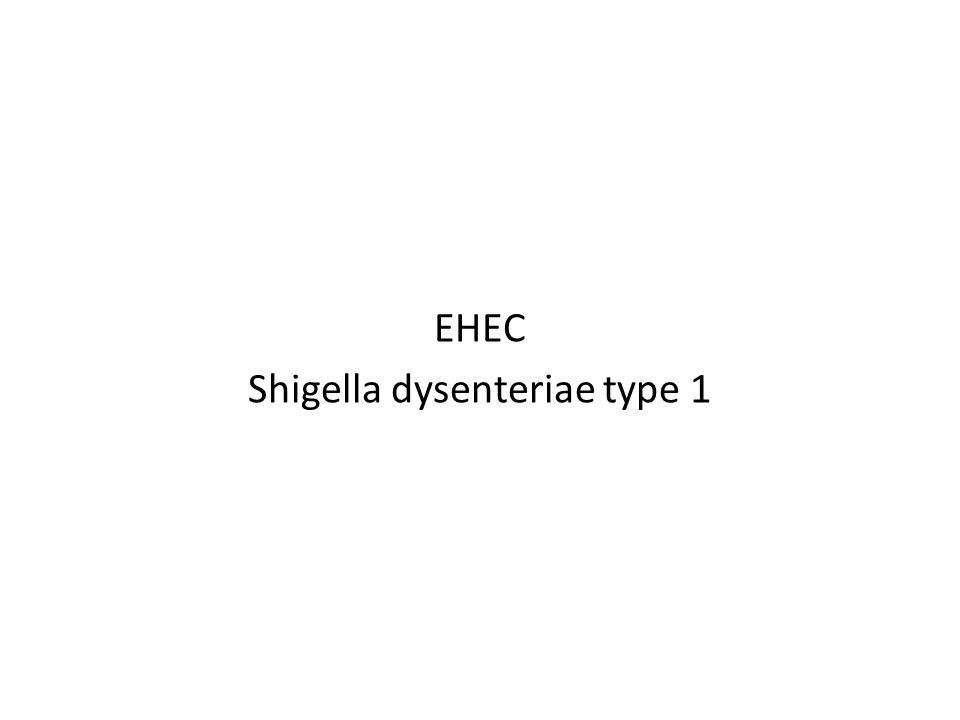 EHEC Shigella dysenteriae type 1