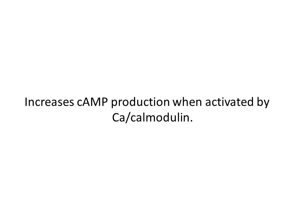 Increases cAMP production when activated by Ca/calmodulin.