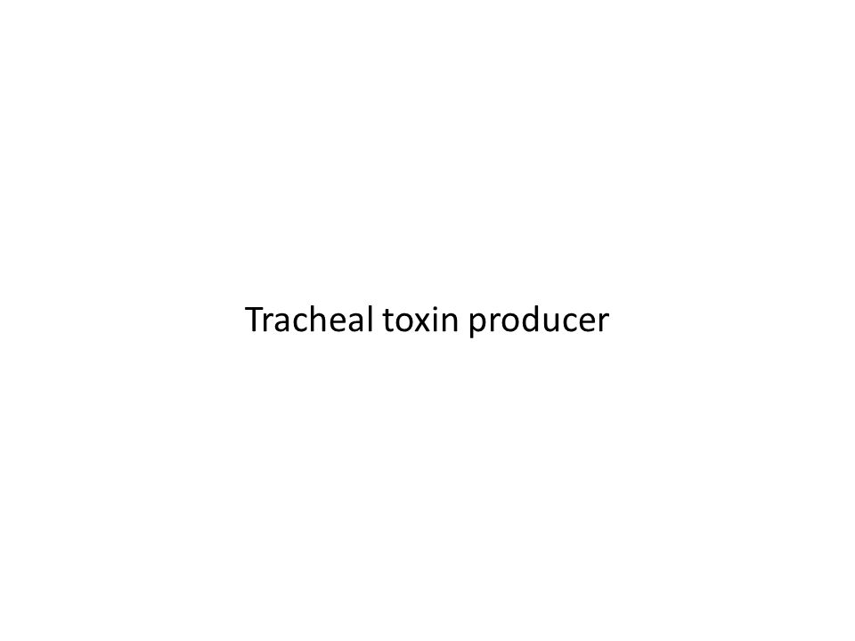 Tracheal toxin producer