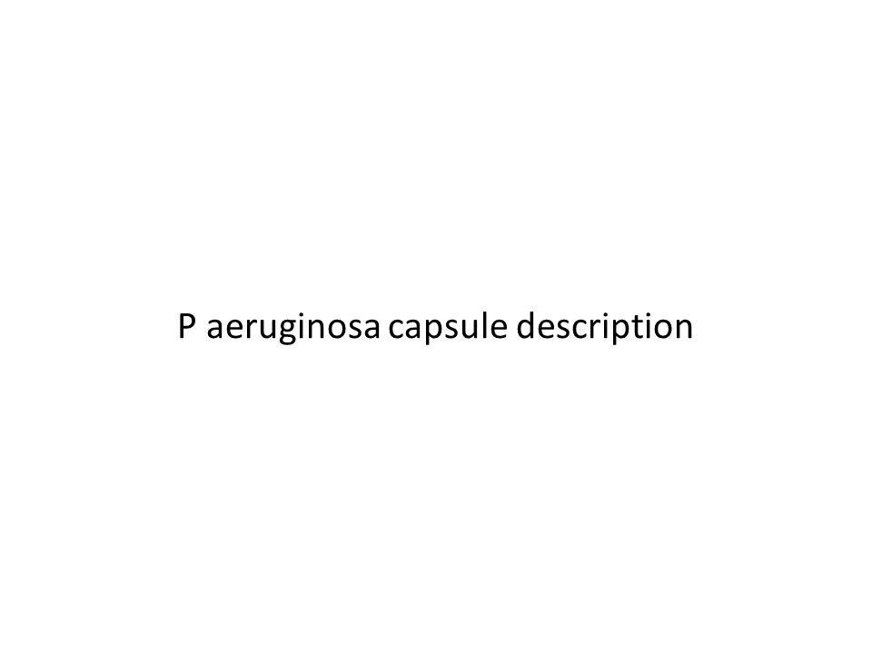 P aeruginosa capsule description