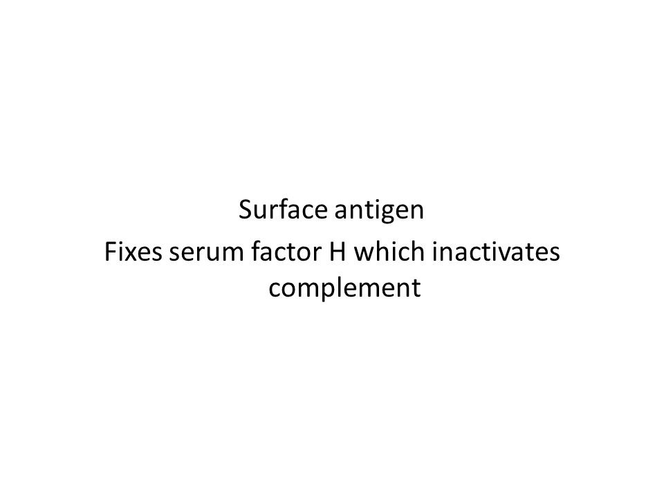 Surface antigen Fixes serum factor H which inactivates complement