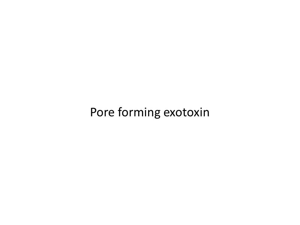 Pore forming exotoxin
