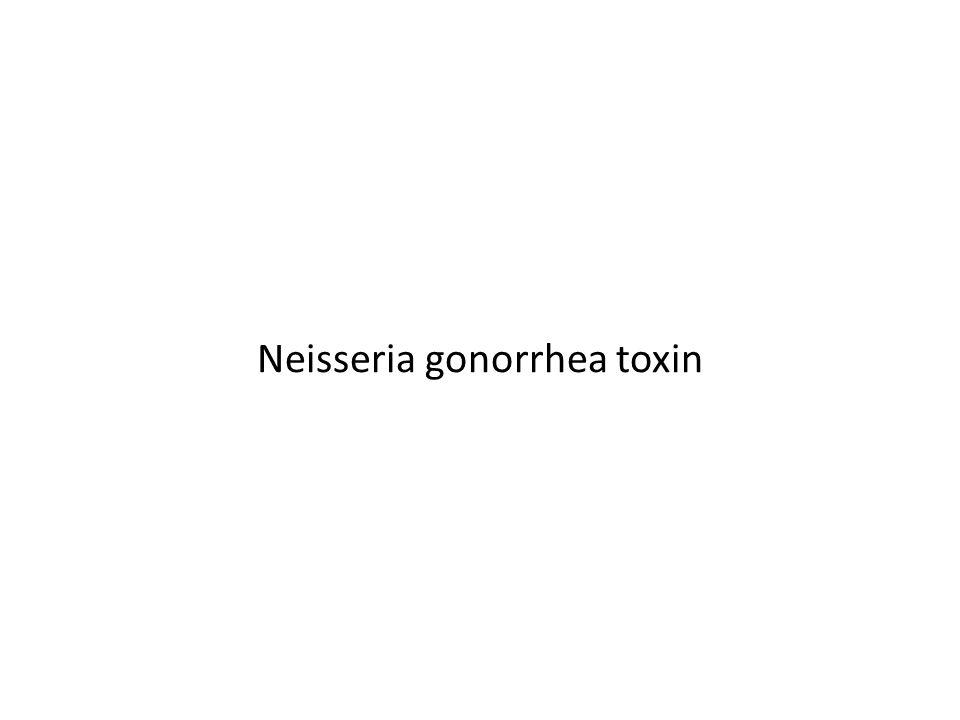 Neisseria gonorrhea toxin