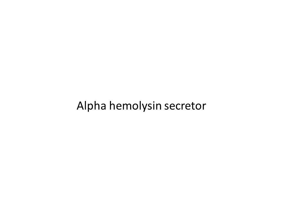 Alpha hemolysin secretor