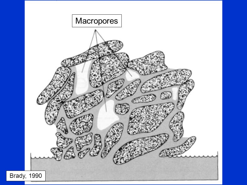 Pore Space Size –Macropores – large, water drains easily –Micropores – small, water held tightly