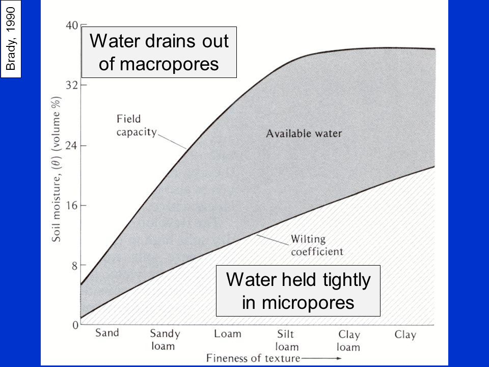 Brady, 1990 Water drains out of macropores Water held tightly in micropores