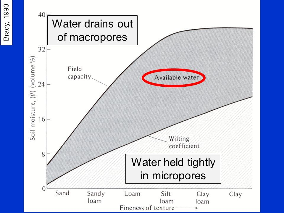 Brady, 1990 Water drains out of macropores Water held tightly in micropores Effect of soil texture on available water?