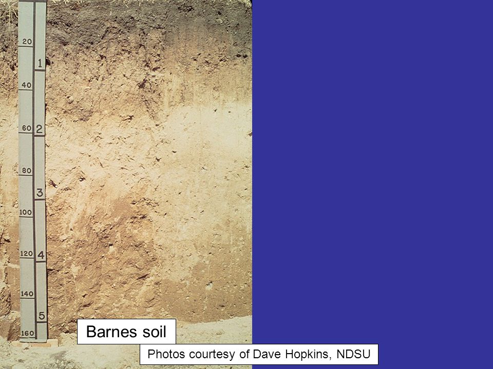 Photos courtesy of Dave Hopkins, NDSU Bowdle soil Barnes soil