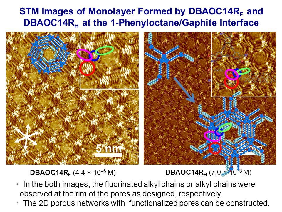 STM Images of Monolayer Formed by DBAOC14R F and DBAOC14R H at the 1-Phenyloctane/Gaphite Interface DBAOC14R F (4.4 × 10 –6 M) DBAOC14R H (7.0 × 10 –6 M) ・ In the both images, the fluorinated alkyl chains or alkyl chains were observed at the rim of the pores as designed, respectively.