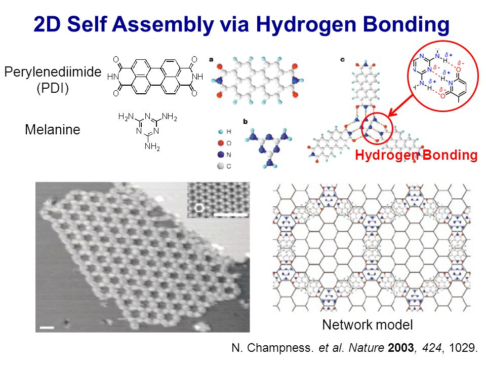 2D Self Assembly via Hydrogen Bonding N. Champness.