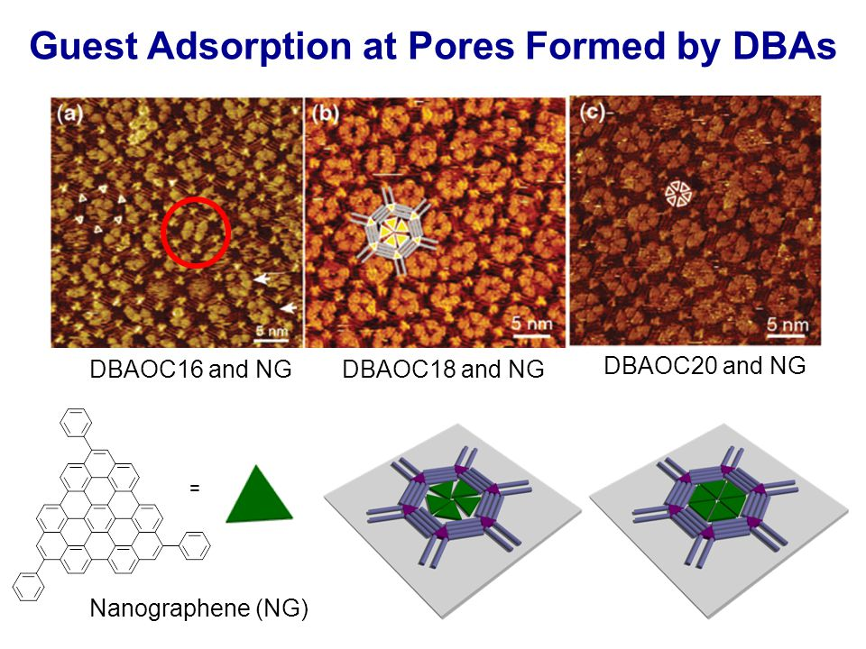 Guest Adsorption at Pores Formed by DBAs = DBAOC16 and NGDBAOC18 and NG DBAOC20 and NG Nanographene (NG)