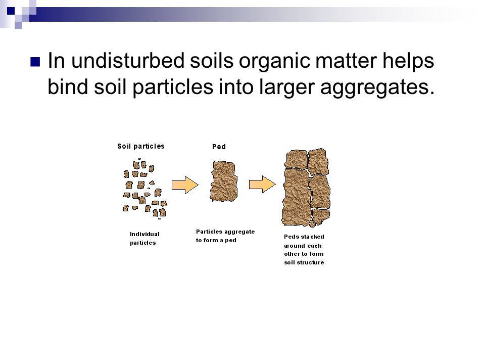 Soil Horizons and the Soil Profile: O – Thin layer of decomposing organic matter.
