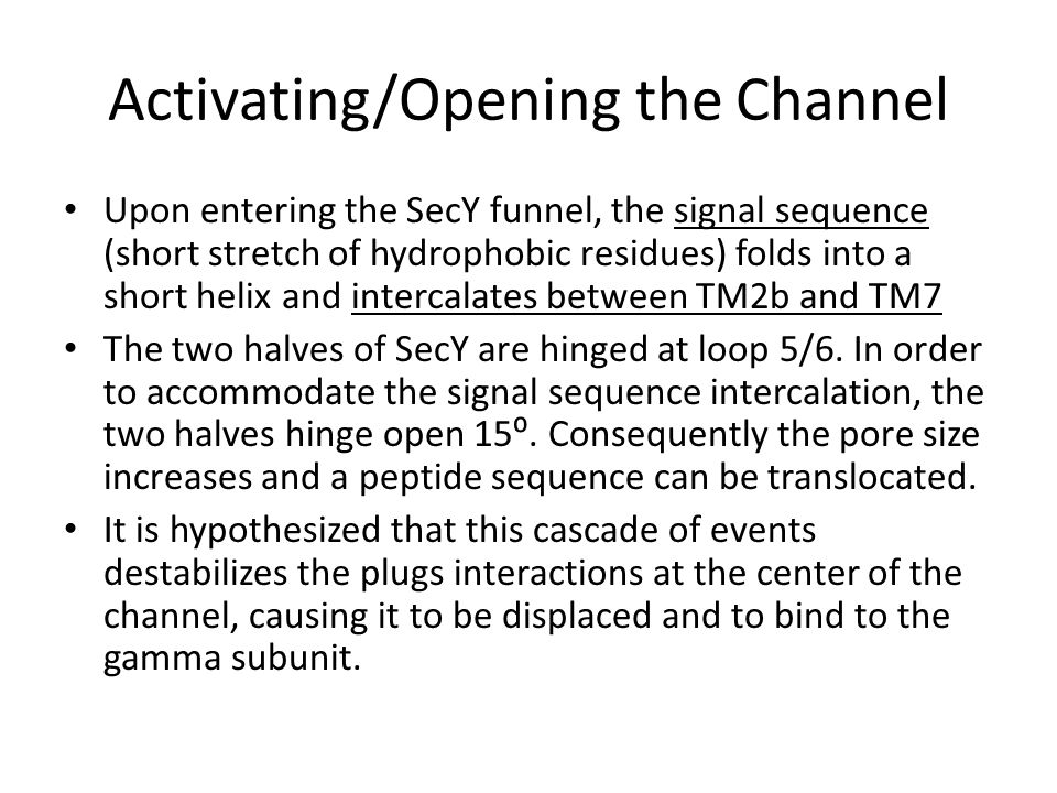 Activating/Opening the Channel Upon entering the SecY funnel, the signal sequence (short stretch of hydrophobic residues) folds into a short helix and intercalates between TM2b and TM7 The two halves of SecY are hinged at loop 5/6.