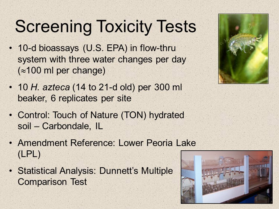 Screening Toxicity Tests 10-d bioassays (U.S. EPA) in flow-thru system with three water changes per day (  100 ml per change) 10 H. azteca (14 to 21-