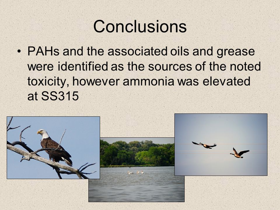 Conclusions PAHs and the associated oils and grease were identified as the sources of the noted toxicity, however ammonia was elevated at SS315