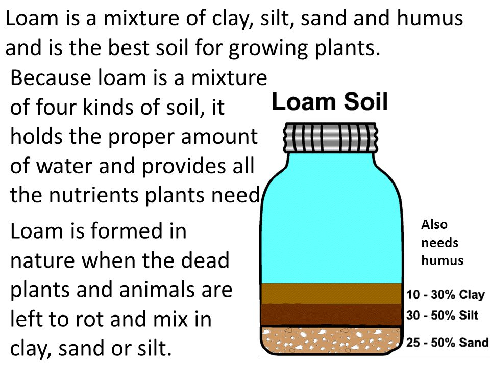 Loam is a mixture of clay, silt, sand and humus and is the best soil for growing plants. Because loam is a mixture of four kinds of soil, it holds the