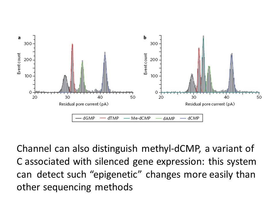 Channel can also distinguish methyl-dCMP, a variant of C associated with silenced gene expression: this system can detect such epigenetic changes more easily than other sequencing methods