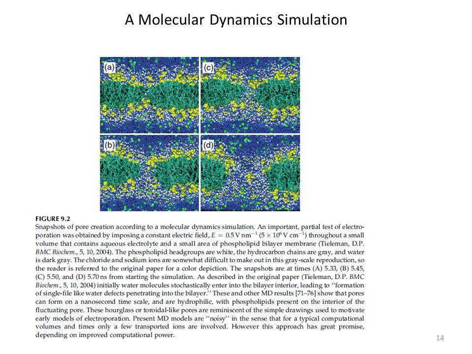 A Molecular Dynamics Simulation 14