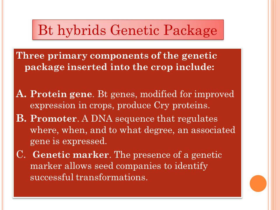 Three primary components of the genetic package inserted into the crop include: A. Protein gene. Bt genes, modified for improved expression in crops,