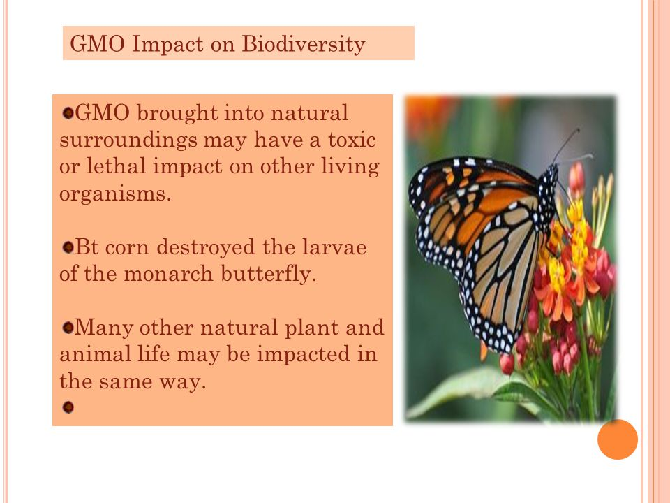 GMO brought into natural surroundings may have a toxic or lethal impact on other living organisms. Bt corn destroyed the larvae of the monarch butterf