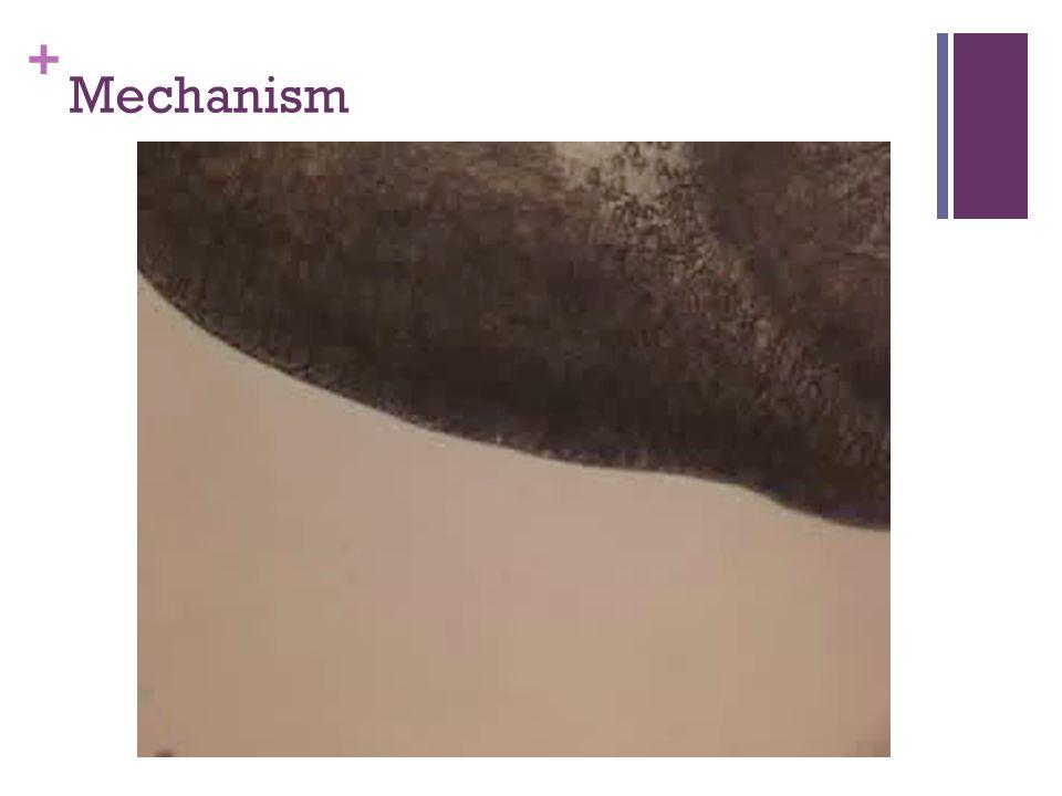 + Mechanism