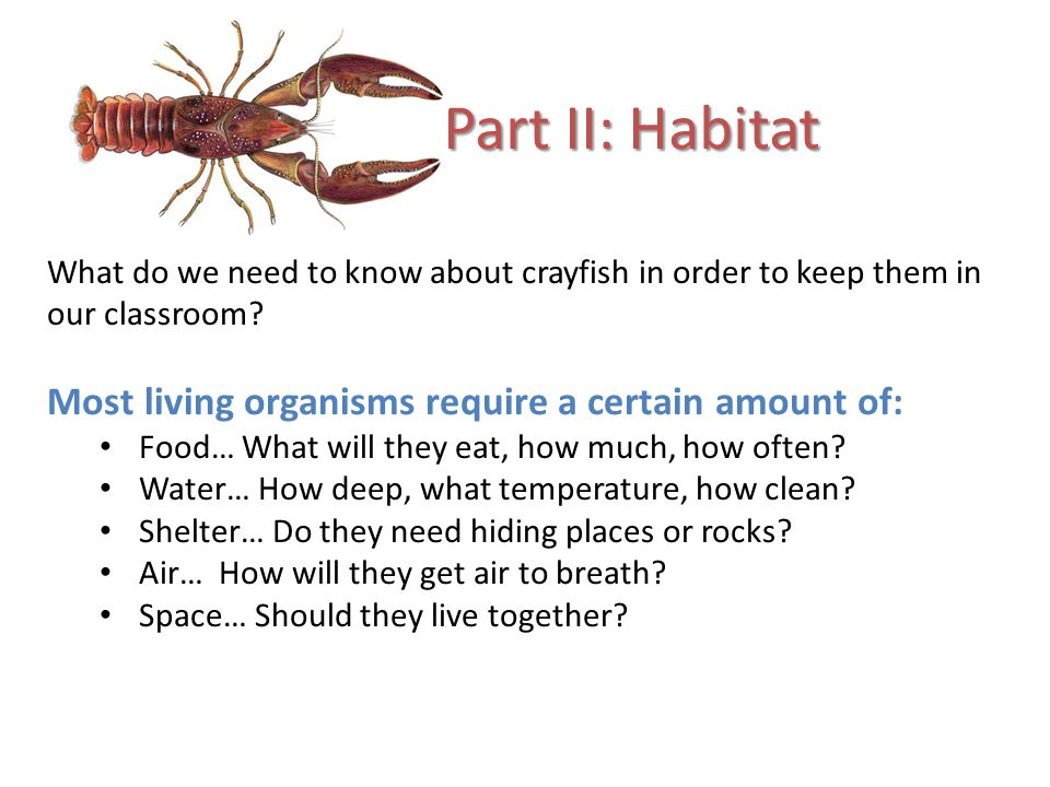 What do we need to know about crayfish in order to keep them in our classroom.