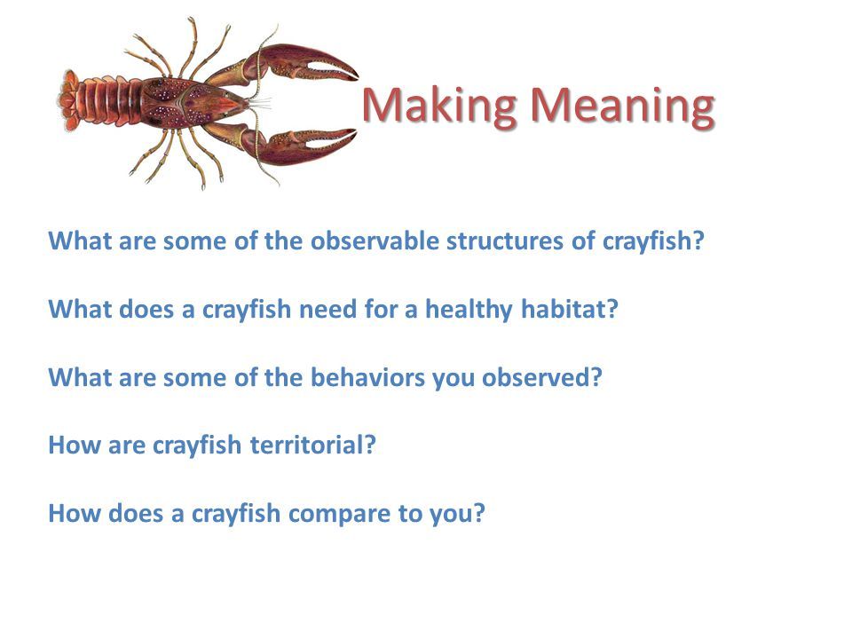 Making Meaning What are some of the observable structures of crayfish.