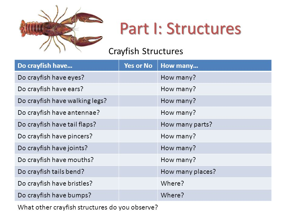 Crayfish Structures Part I: Structures Do crayfish have…Yes or NoHow many… Do crayfish have eyes?How many.