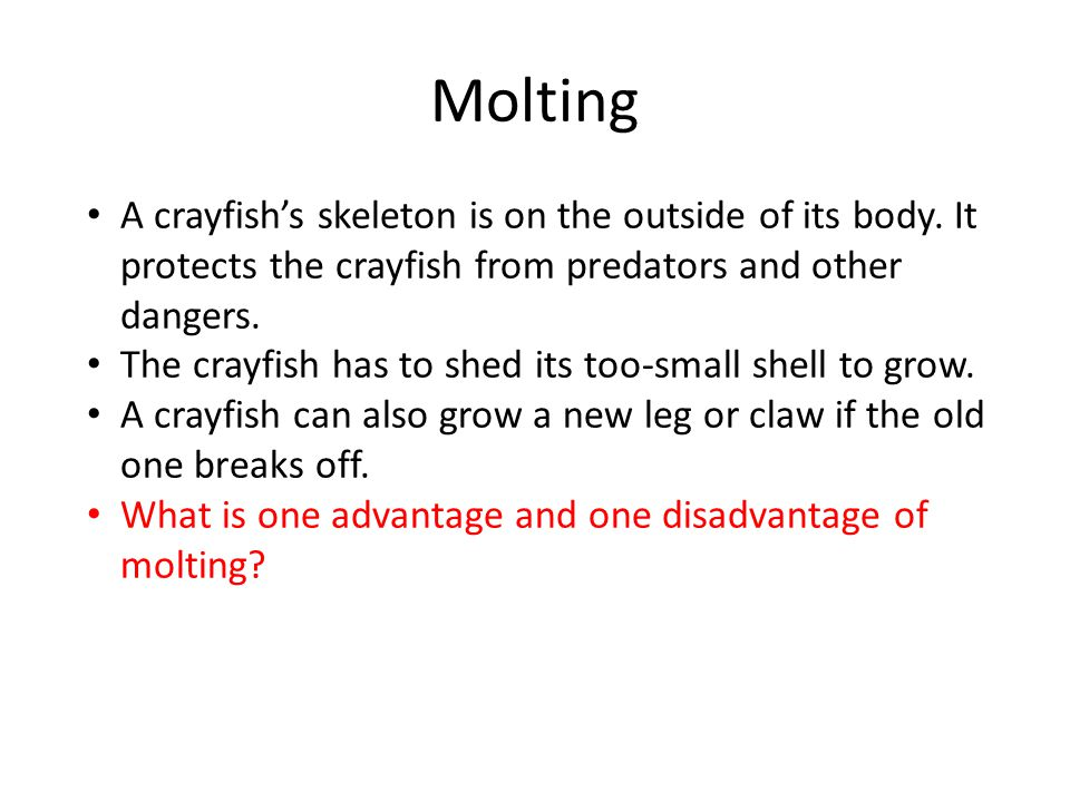 Molting A crayfish's skeleton is on the outside of its body.