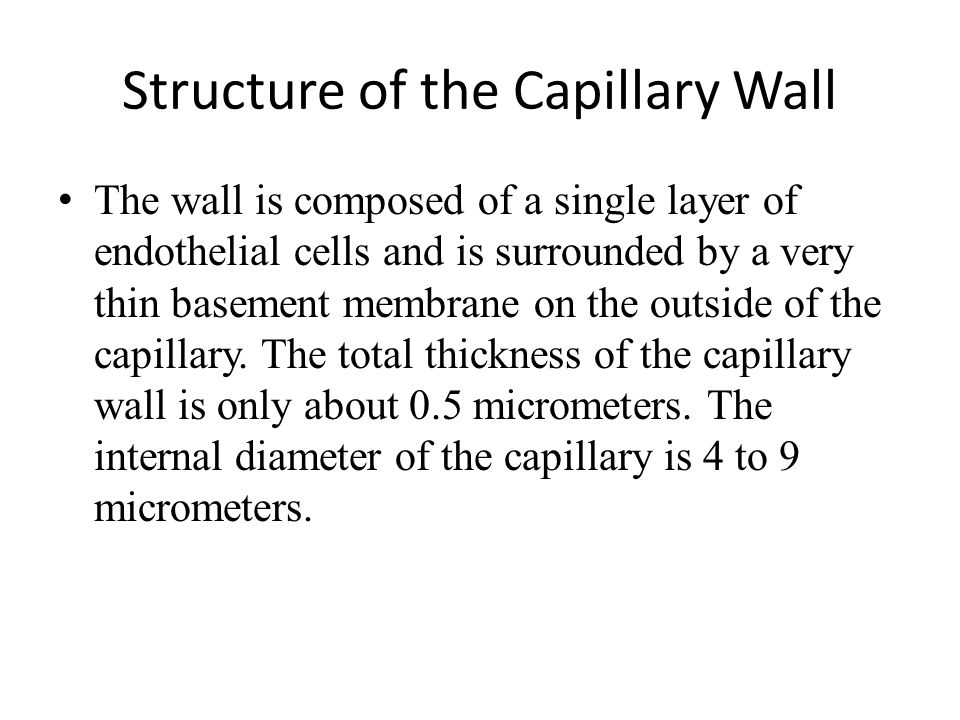 Structure of the Capillary Wall The wall is composed of a single layer of endothelial cells and is surrounded by a very thin basement membrane on the