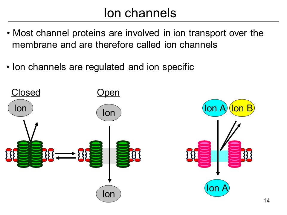 Ion channels Ion OpenClosed Ion AIon B Ion A Most channel proteins are involved in ion transport over the membrane and are therefore called ion channels Ion channels are regulated and ion specific 14