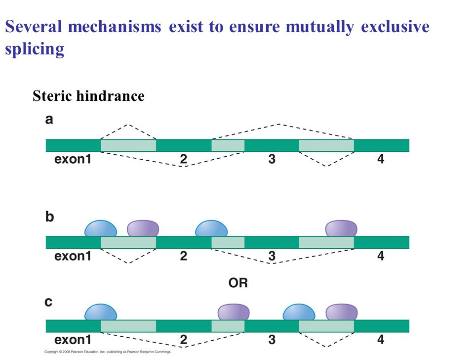 Several mechanisms exist to ensure mutually exclusive splicing Steric hindrance