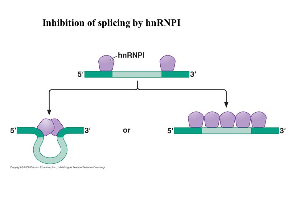 Inhibition of splicing by hnRNPI