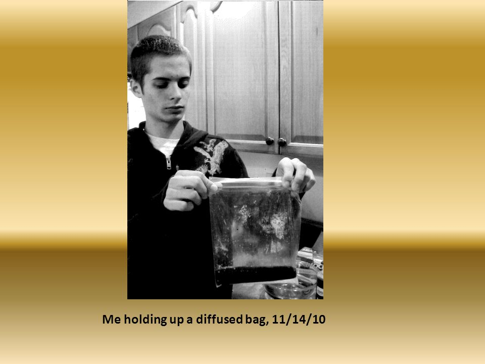 Me holding up a diffused bag, 11/14/10