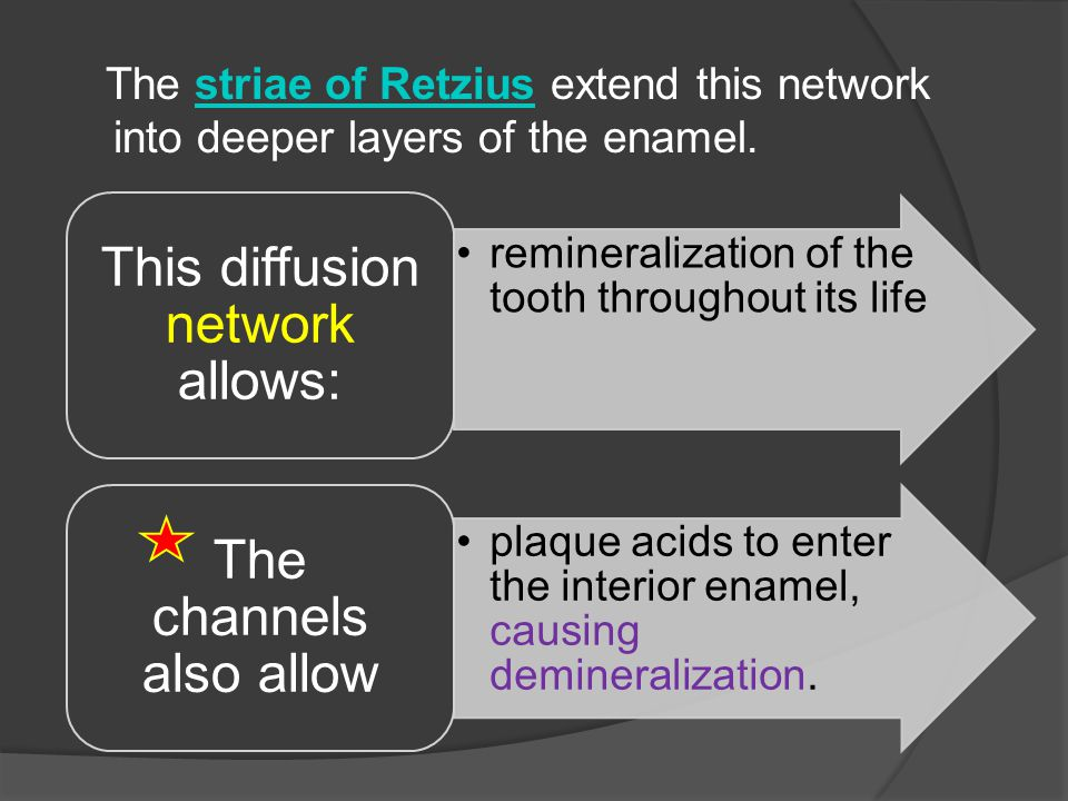 The striae of Retzius extend this network into deeper layers of the enamel.striae of Retzius remineralization of the tooth throughout its life This di
