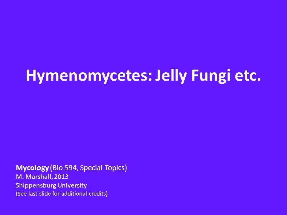 Jelly Fungi Hymenomycetes belonging to orders Auriculariales, Cantharellales (Ceratobasidiaceae, Tulasnella) Dacrymycetales, Filobasidiales, Tremellales Heterobasidiomycetes based on presence of heterobasidium Most members have gelatinous or rubbery basidiocarps Basidia embedded in gelatinous hymenial layer