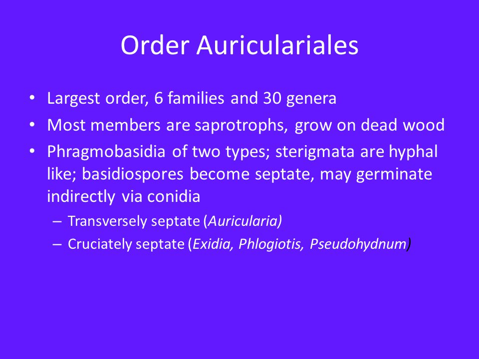 Order Dacrymycetales Members of this family cause brown rot of wood Tuning fork basidia—aseptate, deeply forked, two sterigmata Basidiospores become septate and germinate directly or indirectly Basidiocarps of many species are yellow or orange