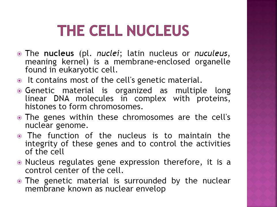  The nucleus (pl.