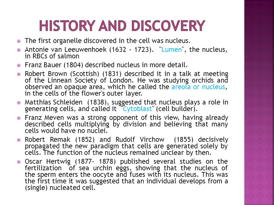  During its lifetime, a nucleus may be broken down, either in the process of cell division or as apoptosis (process of programmed cell death)  During these events the nuclear envelope and lamina — can be systematically degraded  In most cells, the disassembly of the nuclear envelope marks the end of the prophase of mitosis  However, this disassembly of the nucleus is not a universal feature of mitosis and does not occur in unicellular eukaryotes (yeasts) undergo so-called closed mitosis in which the nuclear envelope remains intact.