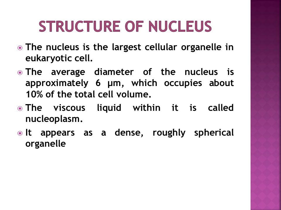  The nucleus is the largest cellular organelle in eukaryotic cell.