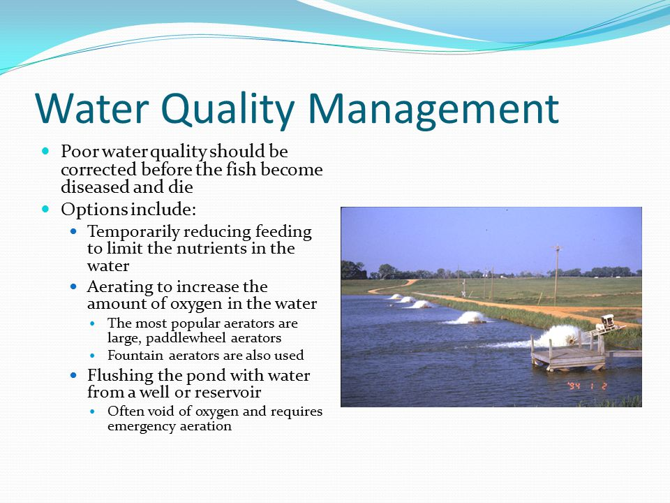 Water Quality Management Poor water quality should be corrected before the fish become diseased and die Options include: Temporarily reducing feeding