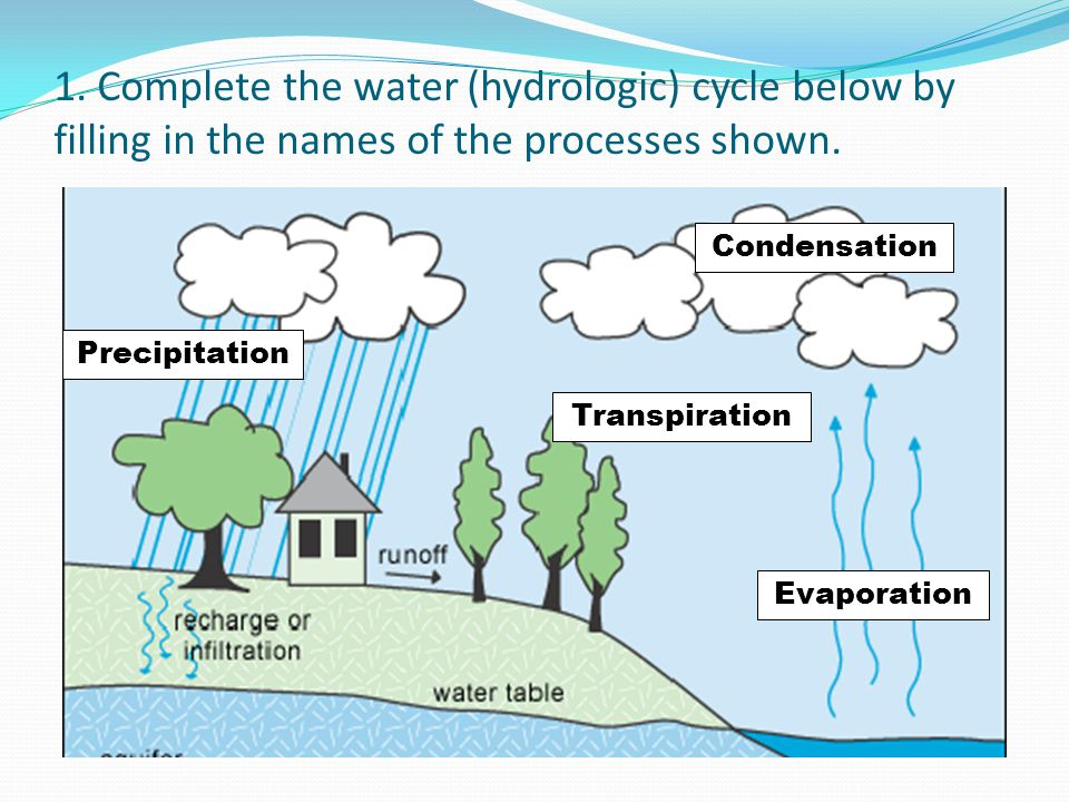 1. Complete the water (hydrologic) cycle below by filling in the names of the processes shown. Precipitation Condensation Transpiration Evaporation