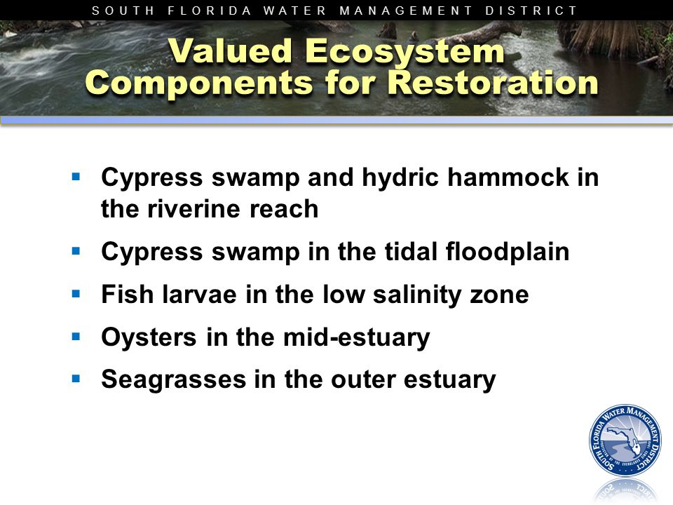 SOUTH FLORIDA WATER MANAGEMENT DISTRICT Valued Ecosystem Components for Restoration  Cypress swamp and hydric hammock in the riverine reach  Cypress