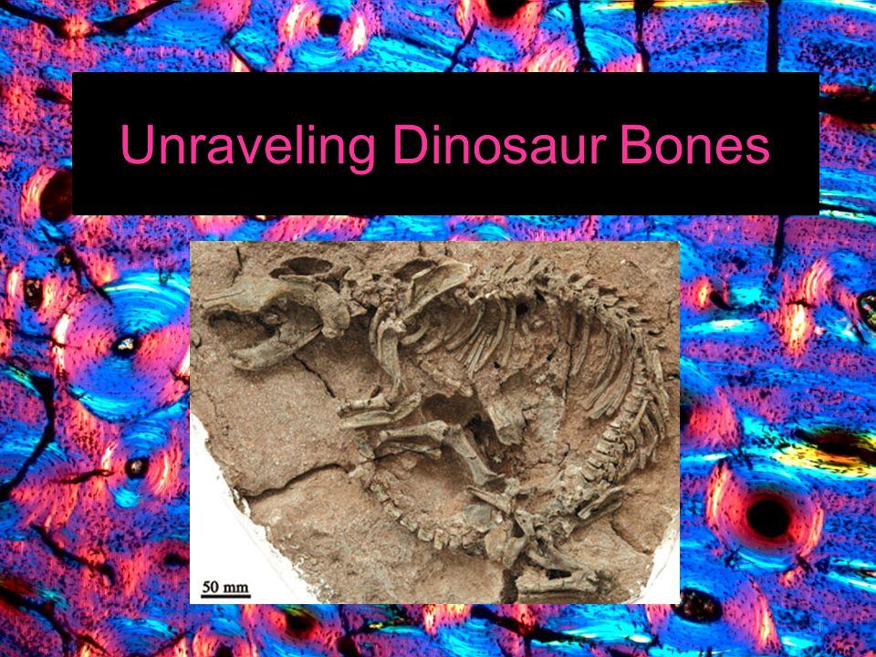 Unraveling Dinosaur Bones 1