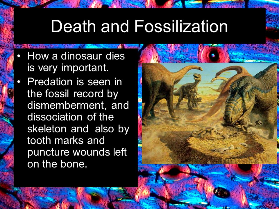 Death and Fossilization How a dinosaur dies is very important.