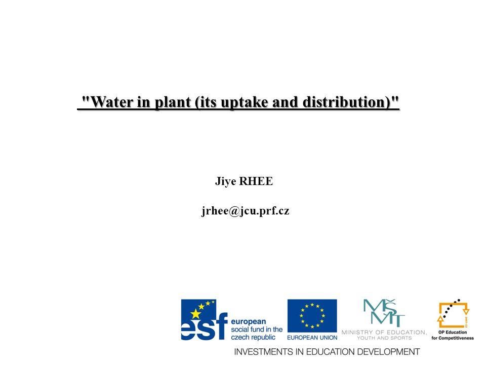 Water in plant (its uptake and distribution) Water in plant (its uptake and distribution) Jiye RHEE jrhee@jcu.prf.cz