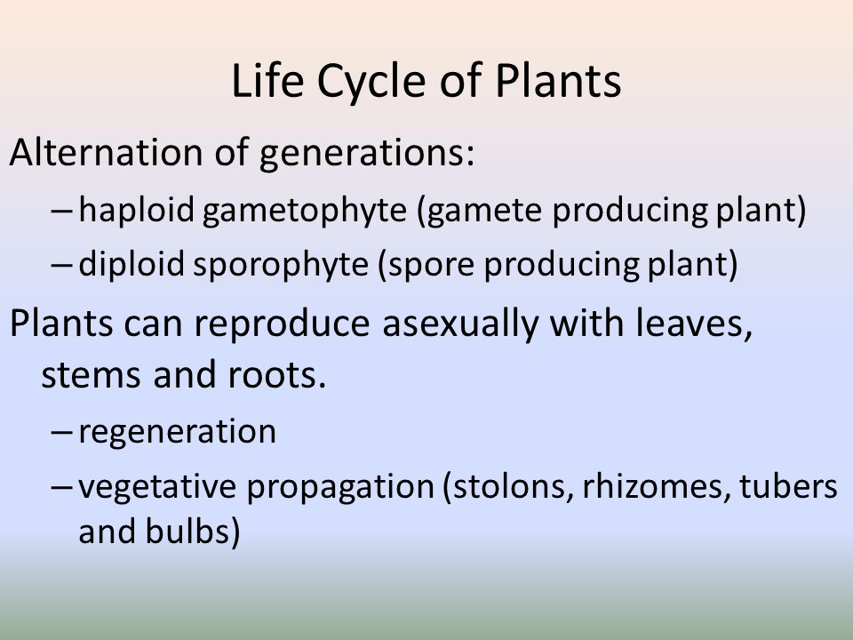 Life Cycle of Plants Alternation of generations: – haploid gametophyte (gamete producing plant) – diploid sporophyte (spore producing plant) Plants ca