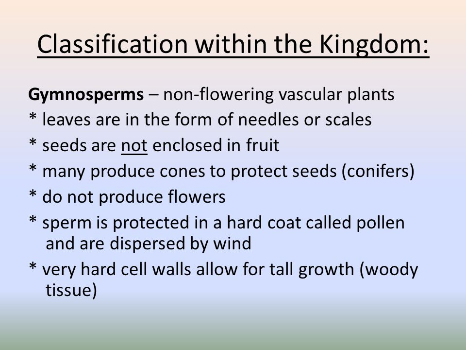 Classification within the Kingdom: Gymnosperms – non-flowering vascular plants * leaves are in the form of needles or scales * seeds are not enclosed